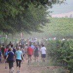 Simonsig Wine Estate Trail Fun