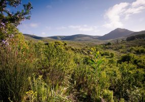 Funky Fynbos Trail Run