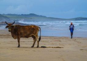 Wild Coast Challenge